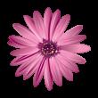 Flower logo vector